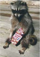 Raccoons and Receivables